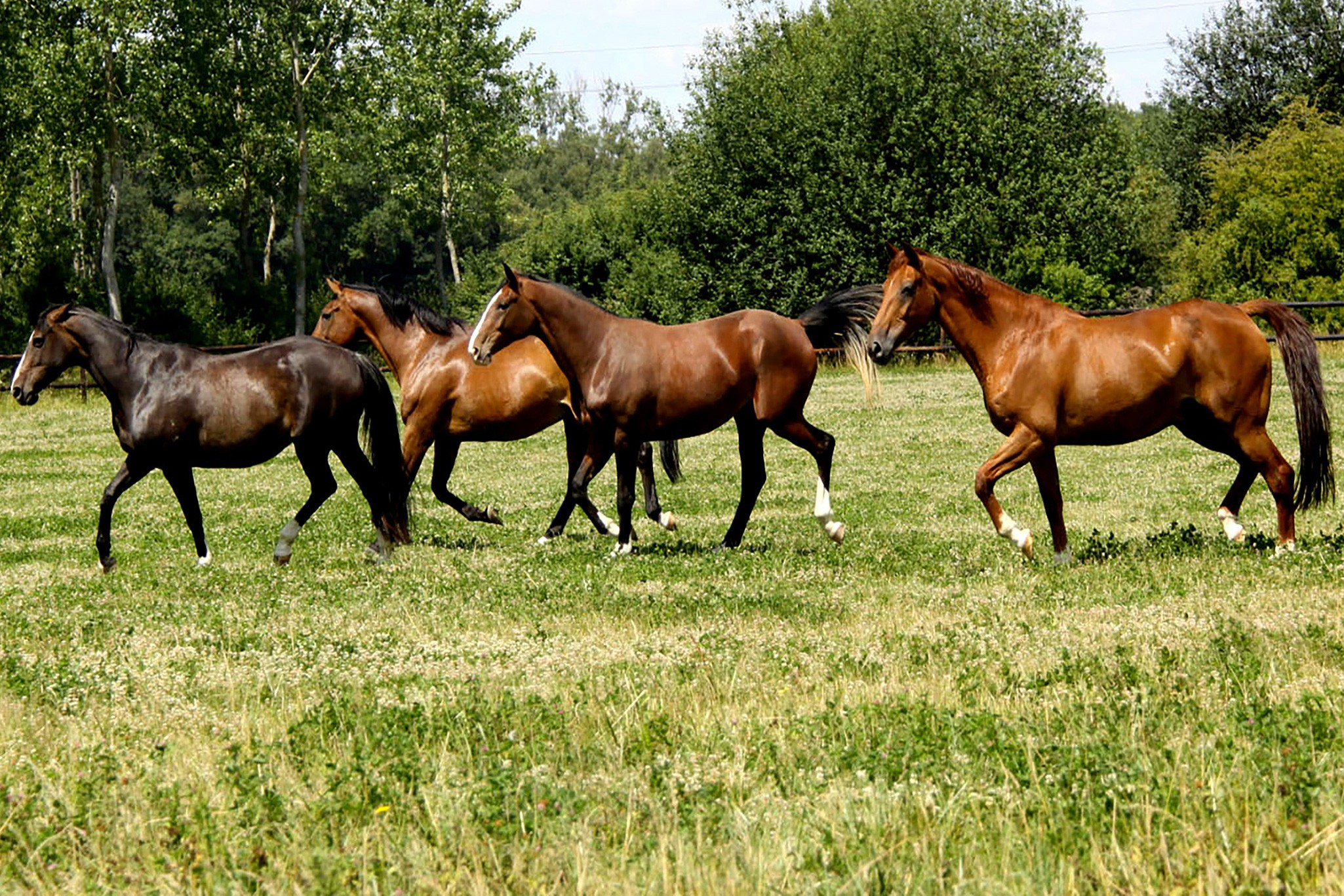 Chevaux - Equibiome